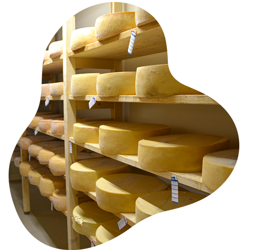 Vente directe de fromage à Saint-Père-en-Retz